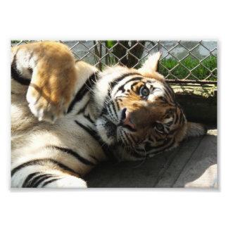 Tiger Kingdom Photo