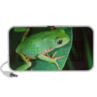 Tiger Leg Monkey Frog, Phyllomedusa Travelling Speakers
