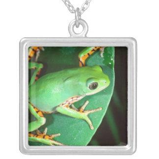 Tiger Leg Monkey Frog, Phyllomedusa Square Pendant Necklace