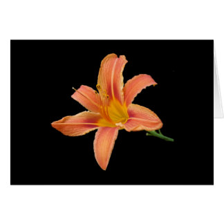 'Tiger Lily' Blank Note Card