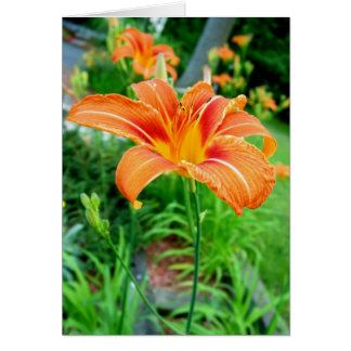 Tiger Lily Blank Notecard Note Card