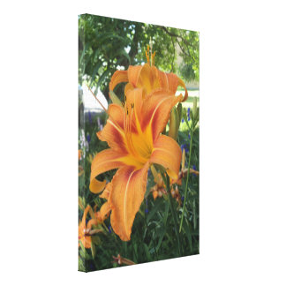 Tiger lily in the garden canvas prints