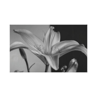 Tiger Lily wrapped canvas photographic print