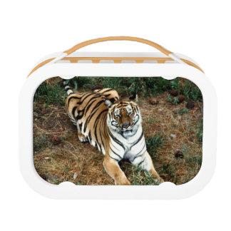 Tiger Lunch Box