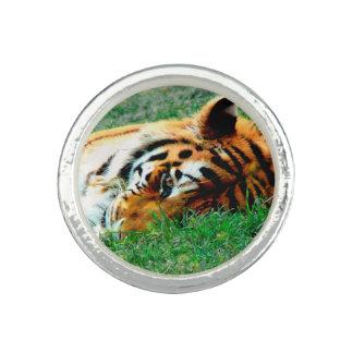 Tiger Lying down Ring