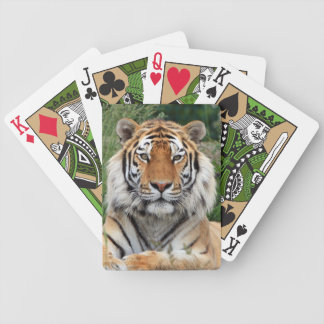 Tiger male head beautiful photo portrait, gift bicycle playing cards