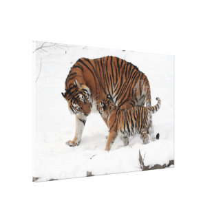 Tiger Mom and Her Baby in Snow Wrapped Canvas Gallery Wrap Canvas