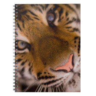Tiger Note Book