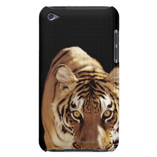 Tiger (Panthera tigris) iPod Touch Covers