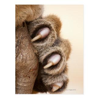 Tiger paw postcard