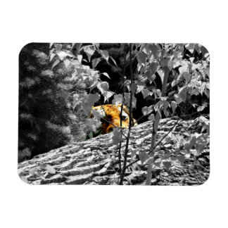 Tiger Peek-a-boo Flexible Magnet