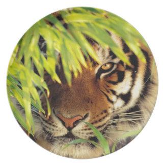 Tiger Peers Behind A Leaf Dinner Plate