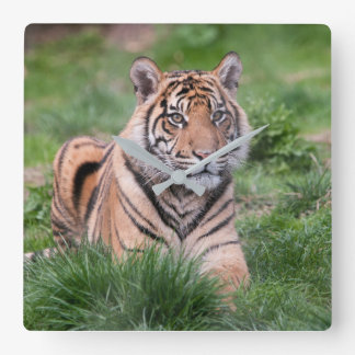 Tiger photography wall clock,Tiger wall display Square Wall Clock