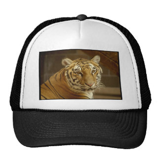 Tiger Picture Cap