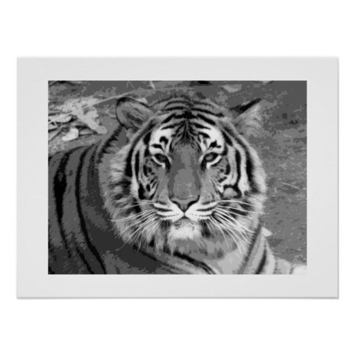 Tiger Poster with White Border