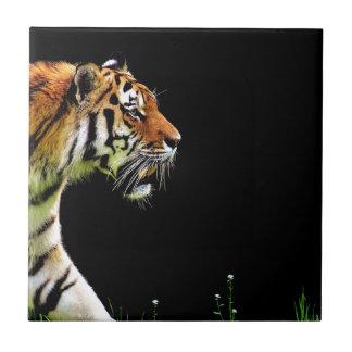 Tiger Predator Fur Beautiful Dangerous Cat Tile