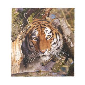 Tiger Predator Lurking Fur Beautiful Dangerous Notepad