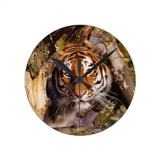 Tiger Predator Lurking Fur Beautiful Dangerous Round Clock