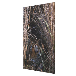 Tiger Reclines in Tall Grass Gallery Wrap Canvas