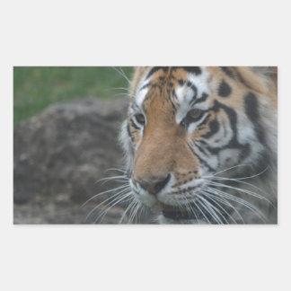 tiger rectangular sticker
