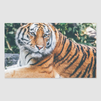 Tiger Rectangular Sticker
