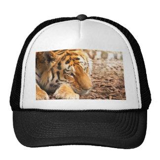 Tiger resting cap