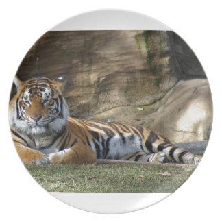 Tiger Resting Plates