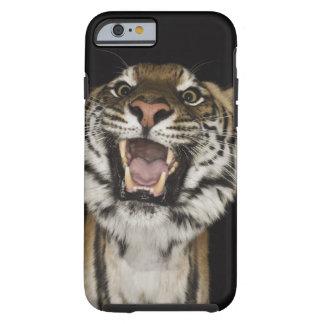 Tiger roaring 2 tough iPhone 6 case