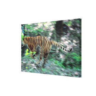 Tiger running gallery wrapped canvas
