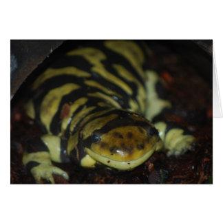 tiger salamander card
