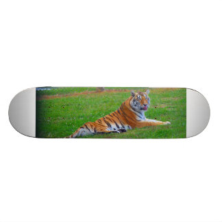 Tiger Skateboard