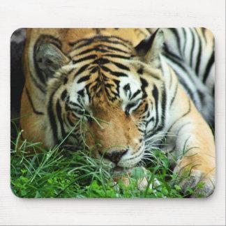 Tiger Sleeping in grass Mousepad