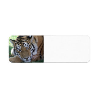 Tiger-sleeping-in-the-grass WILD ANIMALS BIG CATS Return Address Label