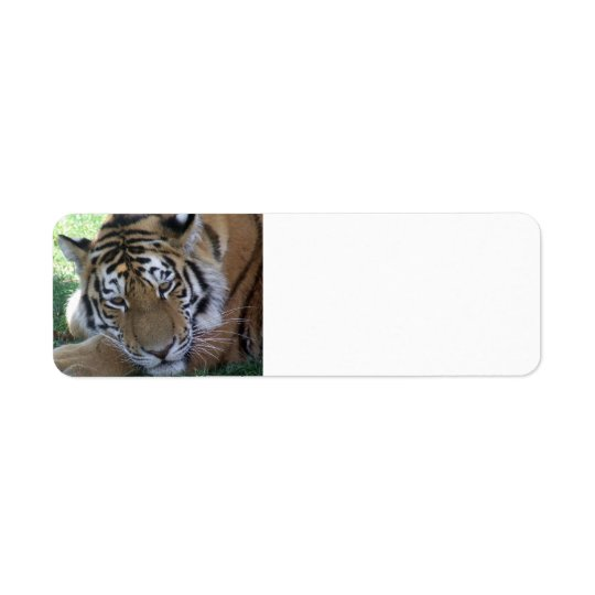 Tiger-sleeping-in-the-grass WILD ANIMALS BIG CATS Return Address Label
