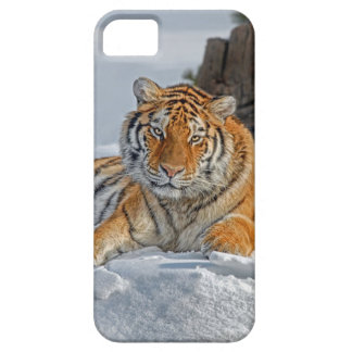 Tiger Snow Portrait Case For The iPhone 5