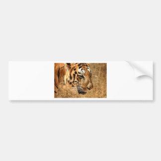 Tiger Stalking in India Bumper Sticker