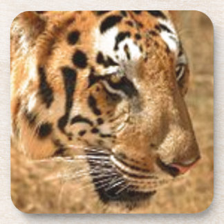 Tiger Stalking in India Coaster