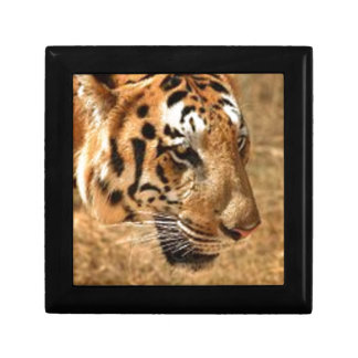 Tiger Stalking in India Gift Box