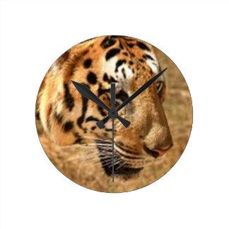 Tiger Stalking in India Round Clock