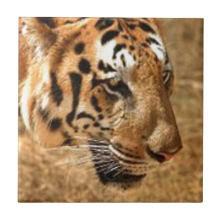Tiger Stalking in India Small Square Tile