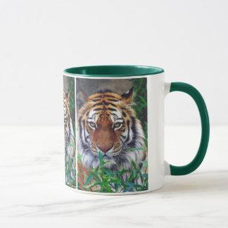 Tiger Stare Mug