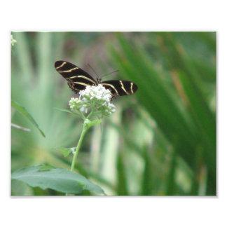 Tiger Stripe Photographic Print