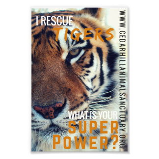 Tiger Super Power Photo Print