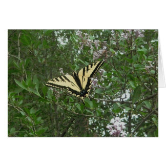 Tiger Swallow Tail Butterfly Greeting Card