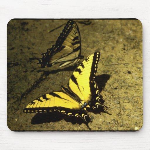 Tiger Swallowtail Butterflies Mousepads