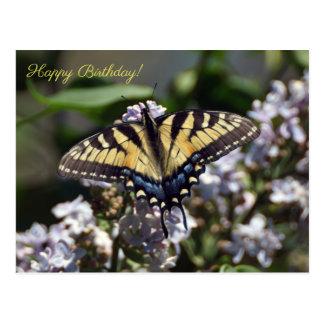 Tiger Swallowtail Butterfly Happy Birthda Postcard