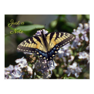 Tiger Swallowtail Butterfly Just a Note Postcard