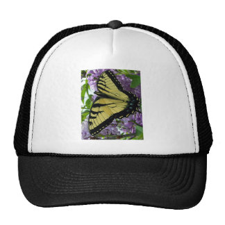 Tiger swallowtail butterfly lilac photo hat