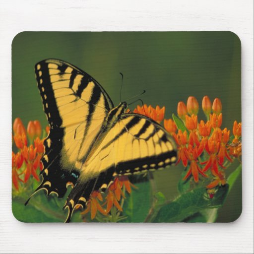 Tiger Swallowtail Butterfly Mousepads