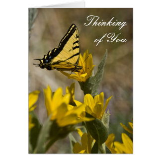 Tiger Swallowtail butterfly on mule's ear Card